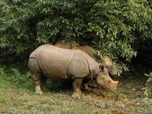 nagarkot hiking chitwan jungle safari tour